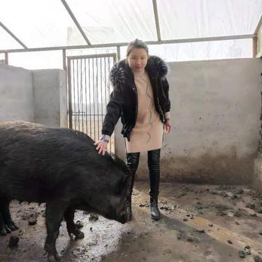 大型野豬扶貧政策  小野豬野豬苗 農村小野豬 本忠畜牧 20斤野豬 野豬場出售價格 野豬肉